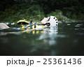 川遊びする女性 25361436