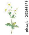 シュウメイギク キブネギク 花のイラスト 25366473