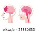 脳のイラスト 25380633