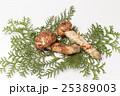 国産の松茸 25389003