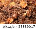 松茸狩りイメージ 25389017