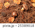 松茸狩りイメージ 25389018