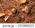 松茸狩りイメージ 25389023
