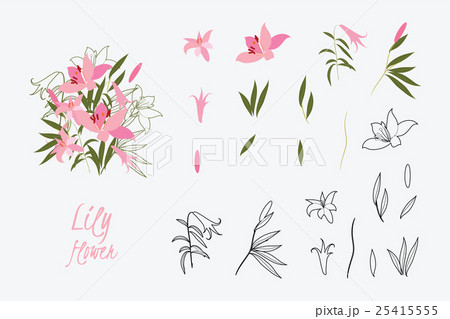 Illustration greeting hand-drawn lily floralのイラスト素材 [25415555] - PIXTA
