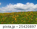 ニッコウキスゲの草原 25420897