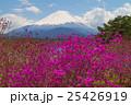 富士山とミツバツツジ 25426919
