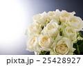 バラ 25428927