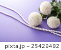 菊 25429492