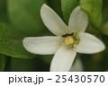 アリ あり 蟻の写真 25430570