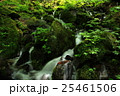スッカン沢の渓流 25461506