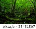 スッカン沢の苔むす森の風景 25461507