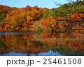 紅葉の観音沼森林公園 25461508