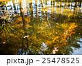 水面に映った紅葉 25478525
