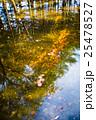 水面に映った紅葉 25478527