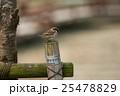すずめ 野鳥 小鳥の写真 25478829