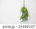 ナチュラルフラワーの飾り 25480107