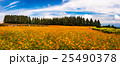 お花畑 生駒高原 キバナコスモスの写真 25490378