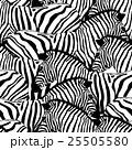 動物 しまうま シマウマのイラスト 25505580