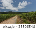 畑 沖縄 久米島の写真 25506548