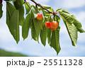 木になるサクランボ 25511328