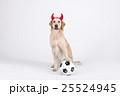 Animal companion and me 008 25524945