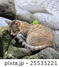 野良猫 25533221