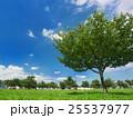 夏空と公園 25537977