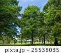 夏の公園 25538035