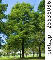 夏の公園 25538036