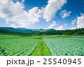 嬬恋村のキャベツ畑 25540945