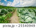 嬬恋村のキャベツ畑 25540949
