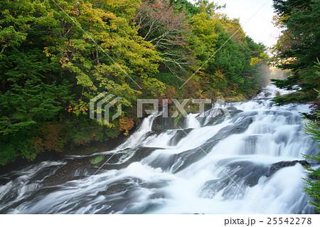 竜頭の滝 25542278