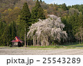 おしら様のしだれ桜 桜 しだれ桜の写真 25543289