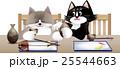 25544663