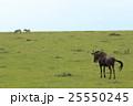 ヌーの後姿(ケニア) 25550245