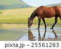 草千里ヶ浜の馬 25561263