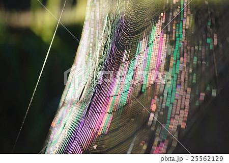 綺麗な蜘蛛の巣 25562129