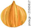 水彩 タマネギ 水彩画のイラスト 25565617