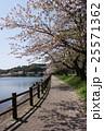 桜の公園 25571362