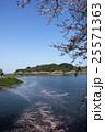桜の公園 25571363