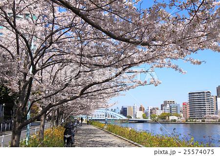 桜 満開 隅田川 永代橋 25574075