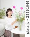 コスモスの花を花瓶に活けるシニア 25591046