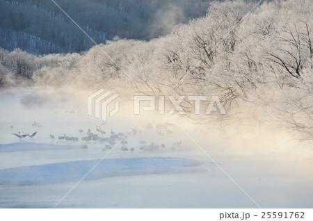 樹氷とタンチョウと川霧 25591762