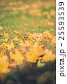 Yellow autumn Maple leaves on green grass. Bokeh 25593539