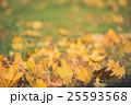 Yellow autumn Maple leaves on green grass. Bokeh 25593568