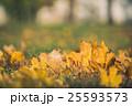 Yellow autumn Maple leaves on green grass. Bokeh 25593573
