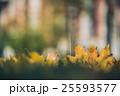 あき 秋 紅葉の写真 25593577