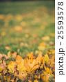 Yellow autumn Maple leaves on green grass. Bokeh 25593578