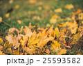 Yellow autumn Maple leaves on green grass. Bokeh 25593582