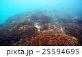 珊瑚 珊瑚礁 群生の写真 25594695